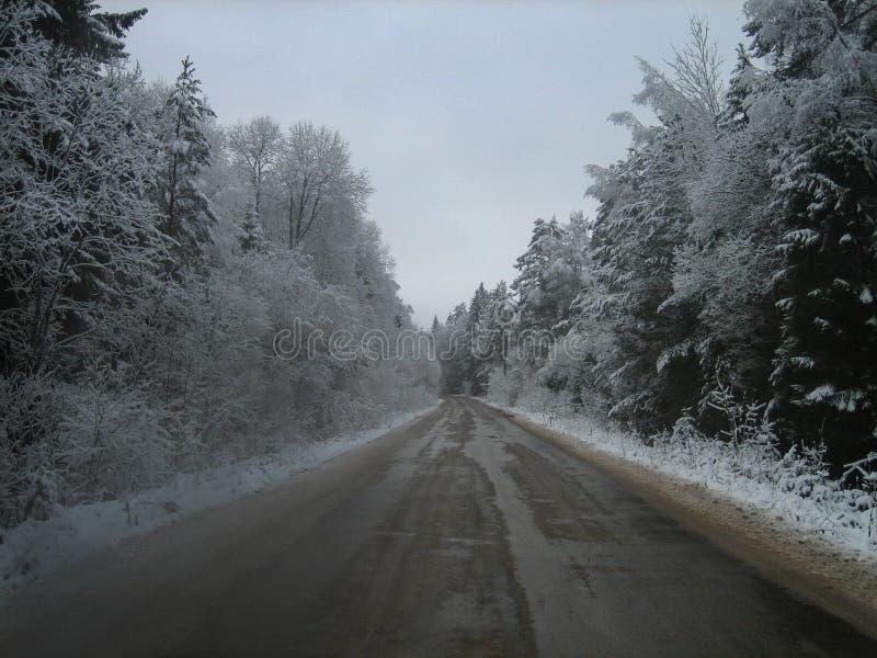 Asfaltväg i den djupa skogen på en våt vinterdag royaltyfria bilder