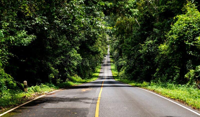 Asfaltväg i nationalparkskog arkivbilder