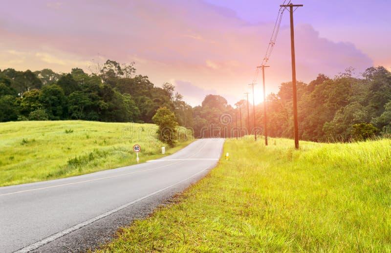 Asfaltväg i nationalparkskog royaltyfri bild