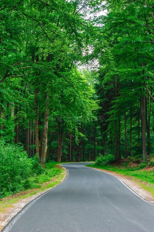 Asfaltväg som leder till och med skogen arkivfoto