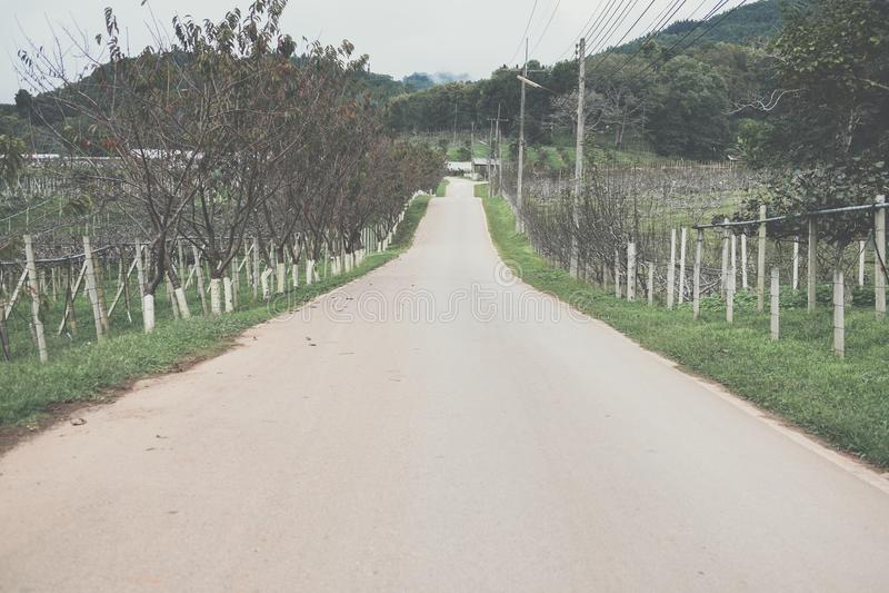 asfaltväg till berget i landsbygd bygdväg med tr royaltyfria foton