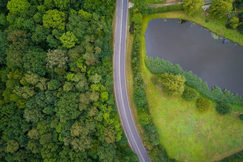Asfaltväg till och med skogen fotografering för bildbyråer
