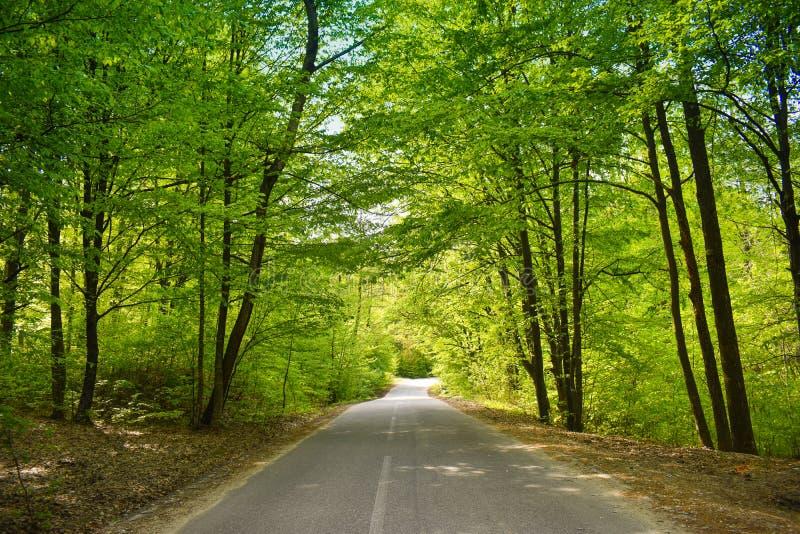 Asfaltv?g till och med den gr?na skogen i en solig v?rdag royaltyfri foto