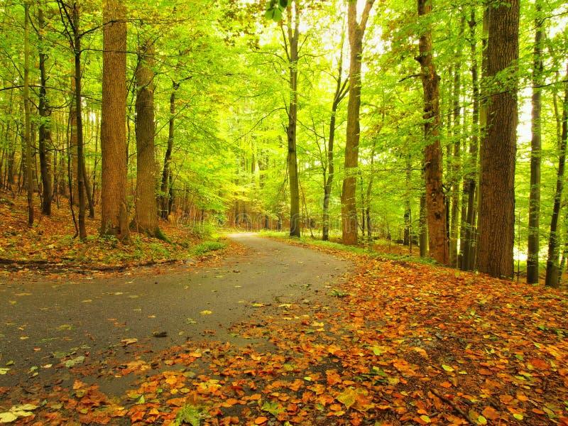 Asfaltweg die onder de beukbomen bij dichtbijgelegen die de herfstbos leiden door mist wordt omringd Regenachtige dag royalty-vrije stock foto's