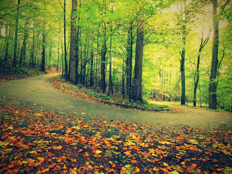 Asfaltweg die onder de beukbomen bij dichtbijgelegen die de herfstbos leiden door mist wordt omringd Regenachtige dag royalty-vrije stock afbeelding