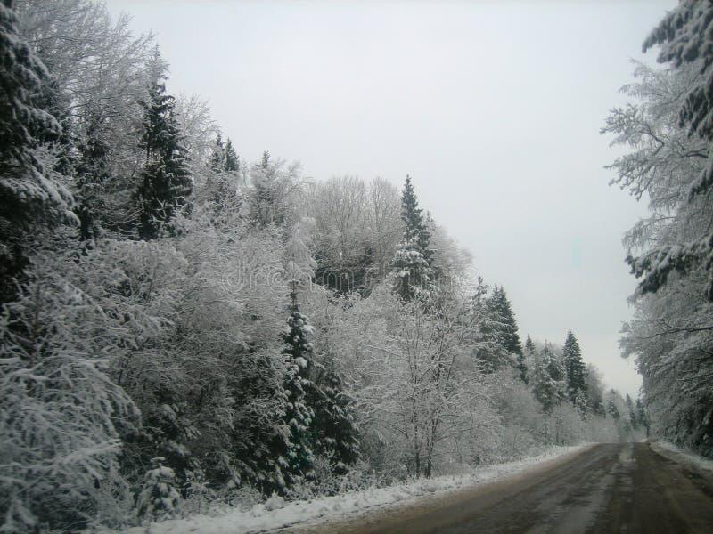 Asfaltweg in het diepe bos op een natte de winterdag royalty-vrije stock fotografie