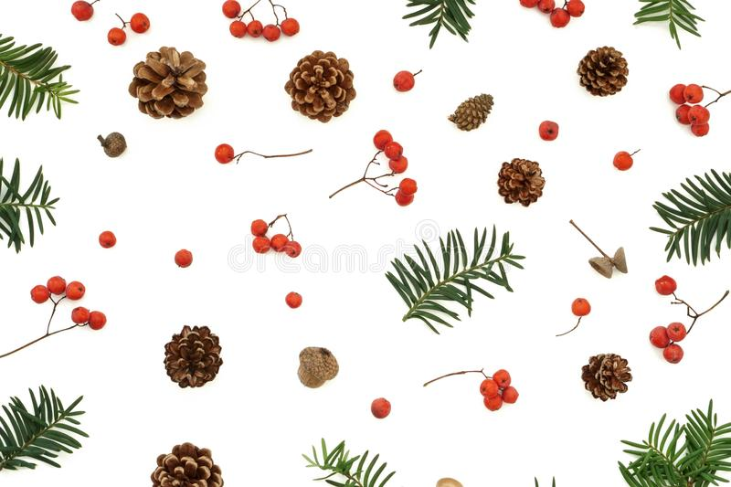 Ash berries pine cone acorn and evergreen branches pattern royalty free stock photos
