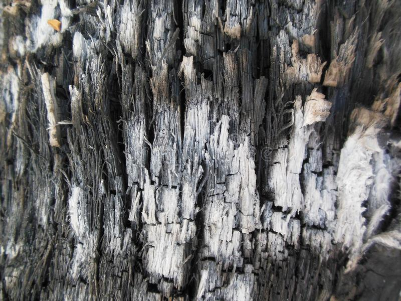 Ash Of Coconut imagem de stock