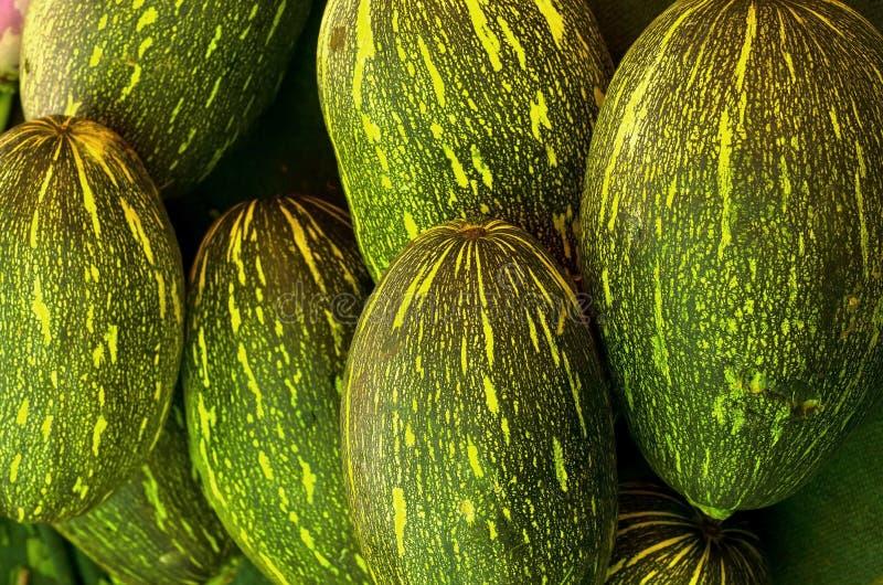 Ash gourd stock photos