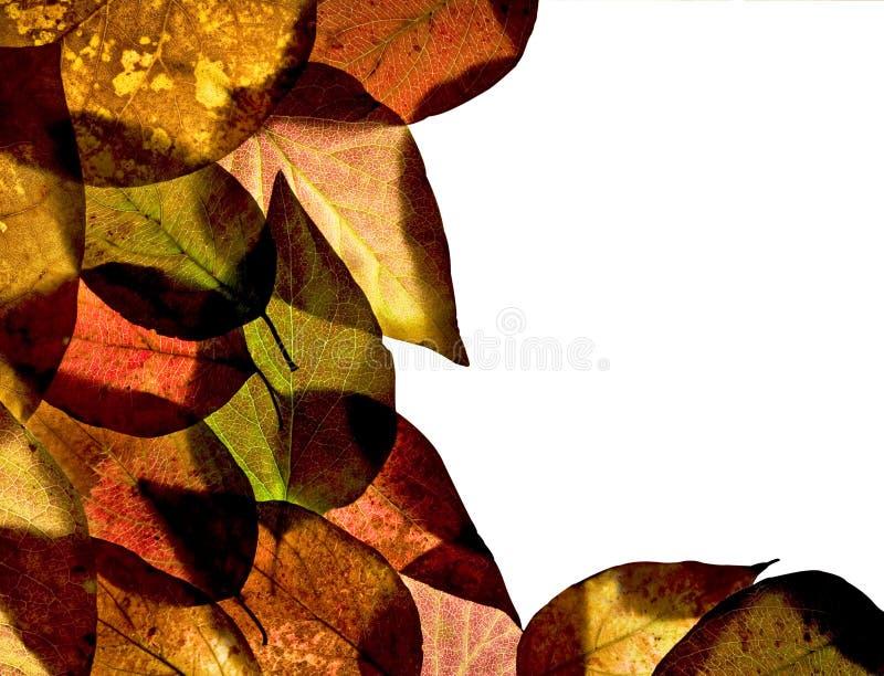 Download Ash leaf border stock image. Image of orange, background - 11410683