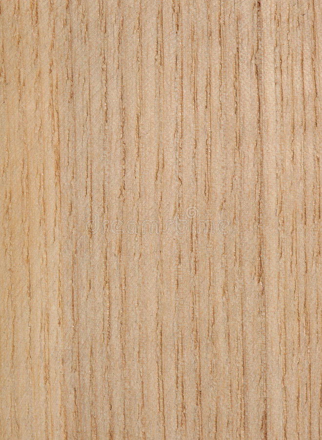 Ash tree texture royalty free stock image