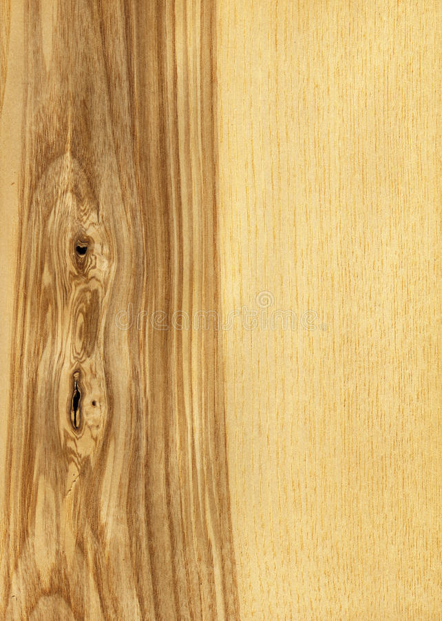Ash tree wood texture stock photo image of closeup