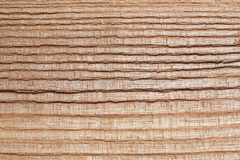 Ash tree wood texture stock image