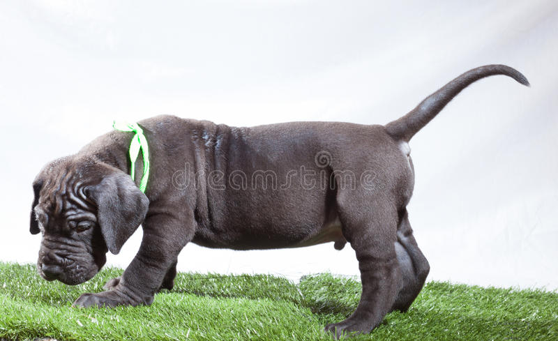 Download Ashamed puppy stock image. Image of green, animal, youth - 34507541