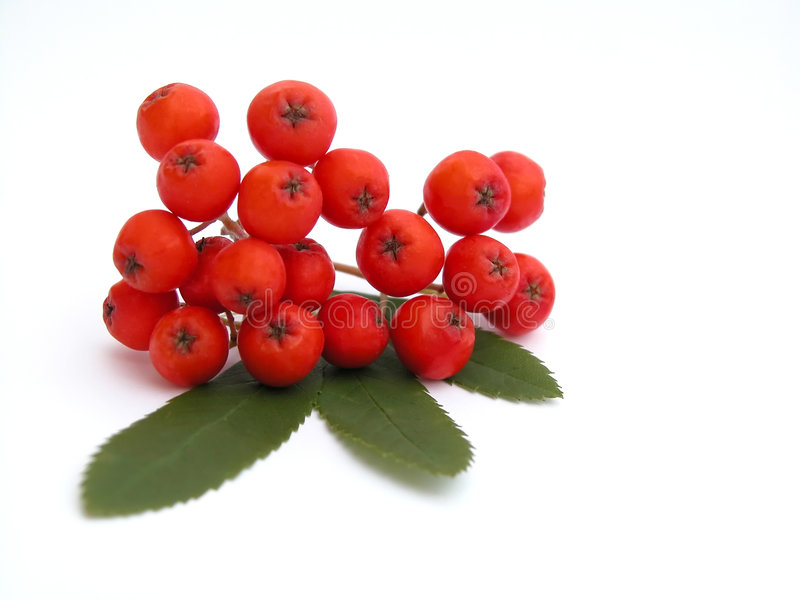 Ashberry image stock