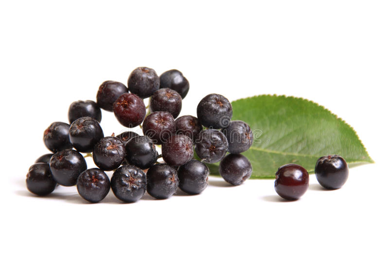 Ashberry preto imagens de stock