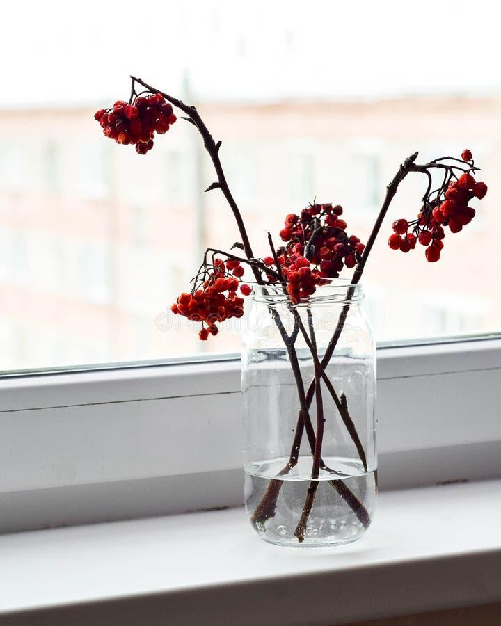 Ashberry rouge dans le verre sur un filon-couche blanc de fenêtre photo libre de droits