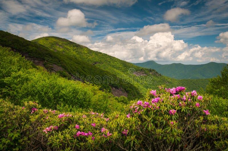 Asheville Carolina Blue Ridge Parkway Spring norte floresce Sceni fotos de stock royalty free
