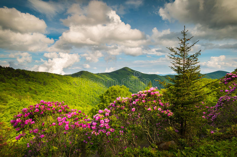 Asheville Pólnocna Karolina grani Parkway Błękitna wiosna Kwitnie Sceni zdjęcie royalty free