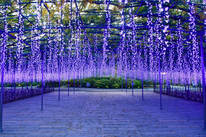 Ashikaga Flower Park, Tochigi, Japan. Ashikaga Flower Park is one of Japan`s largest flower parks, famous for its many stunning illumination events. Located in royalty free stock image