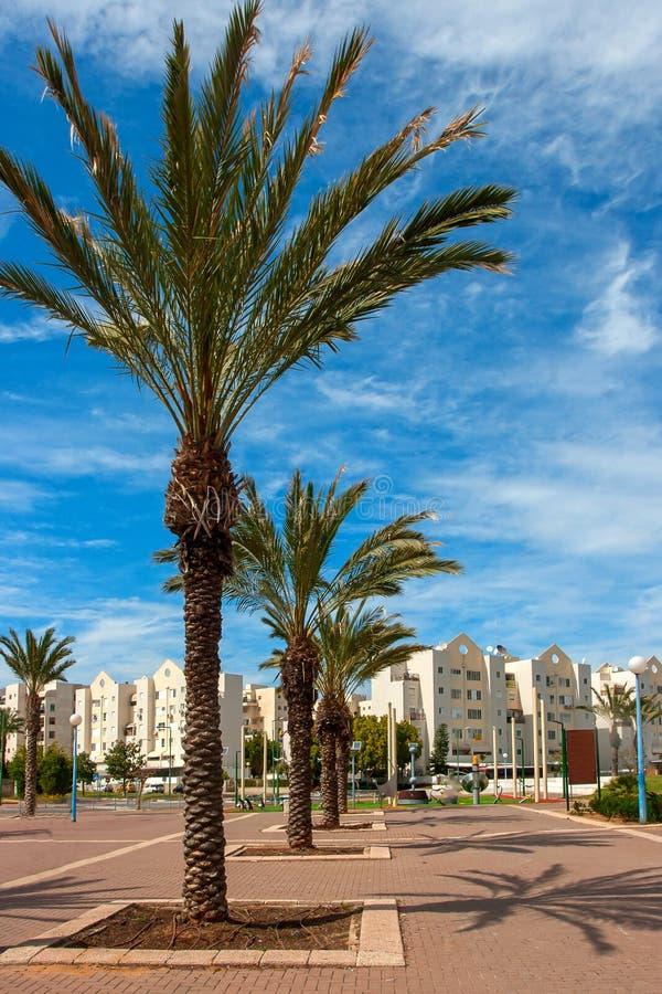 Ashkelon-Straße mit Palmen stockbild