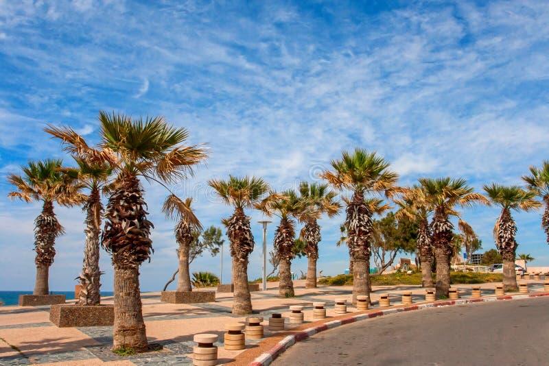 Ashkelon-Straße mit Palmen stockfoto