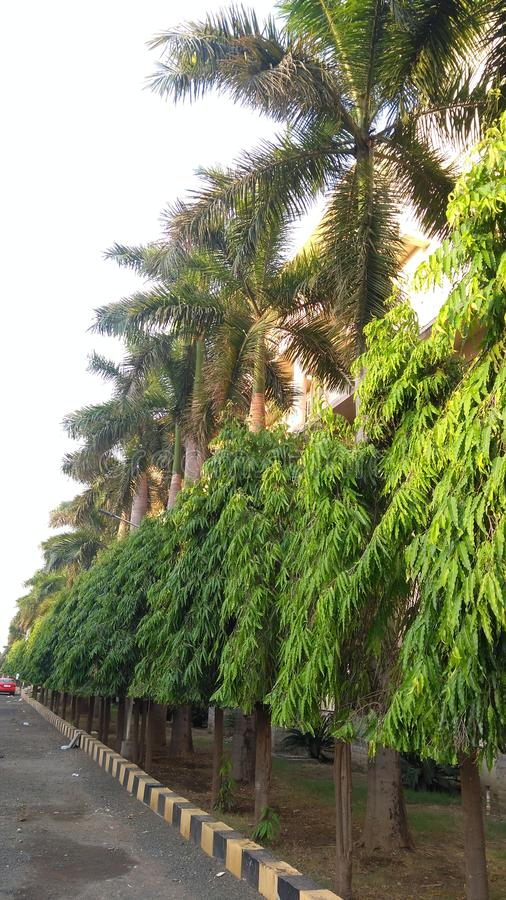 Ashoka кокос n небо стоковое фото rf