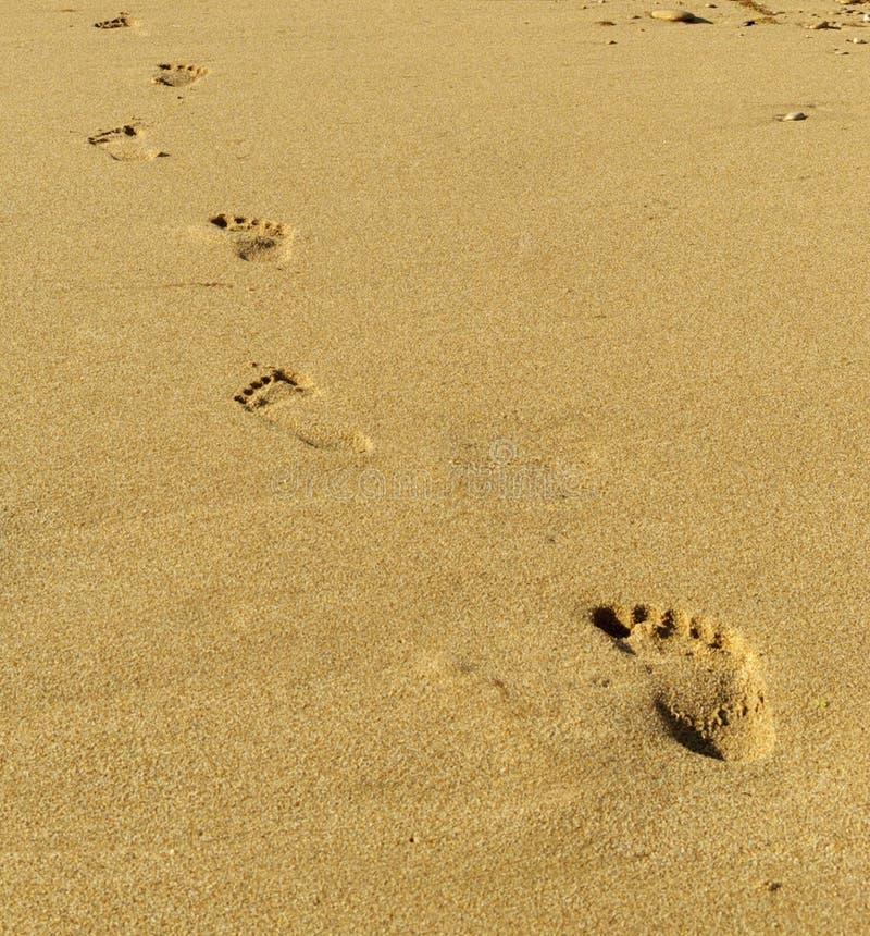 ashore следы стоковые фото