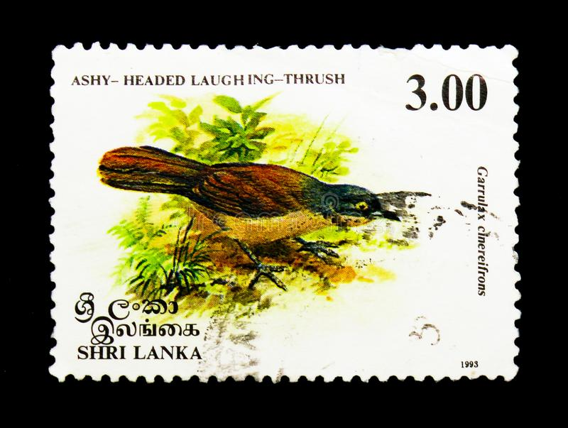 Ashy-headed Laughing thrush (Garrulax cinereifrons), Birds serie. MOSCOW, RUSSIA - NOVEMBER 26, 2017: A stamp printed in Sri Lanka shows Ashy-headed stock image