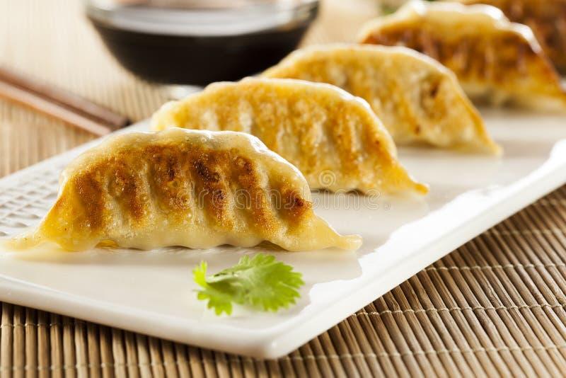 Asiático caseiro Vegeterian Potstickers imagens de stock