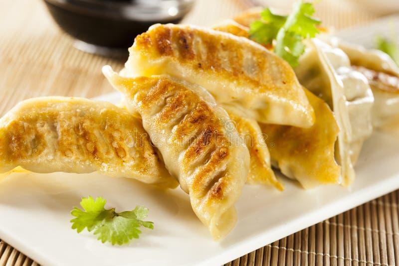 Asiático caseiro Vegeterian Potstickers imagem de stock