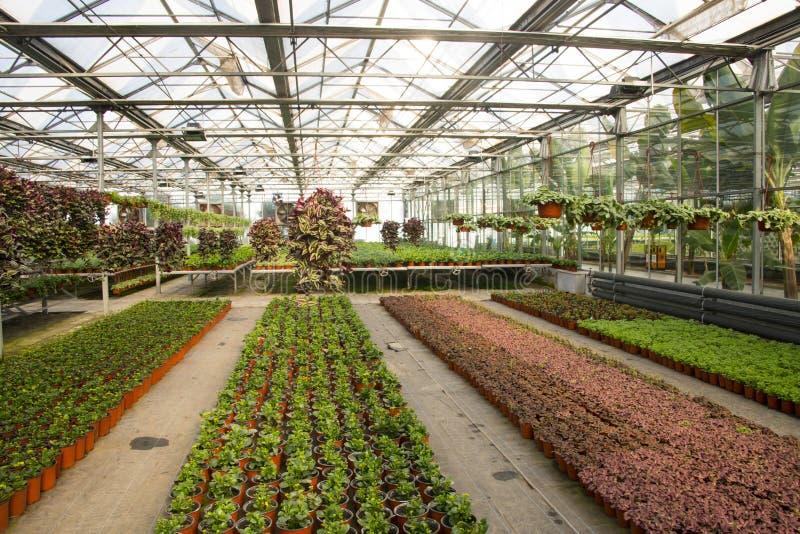 Asiático China, Pekín, jardín geotérmico de la expo, invernadero foto de archivo