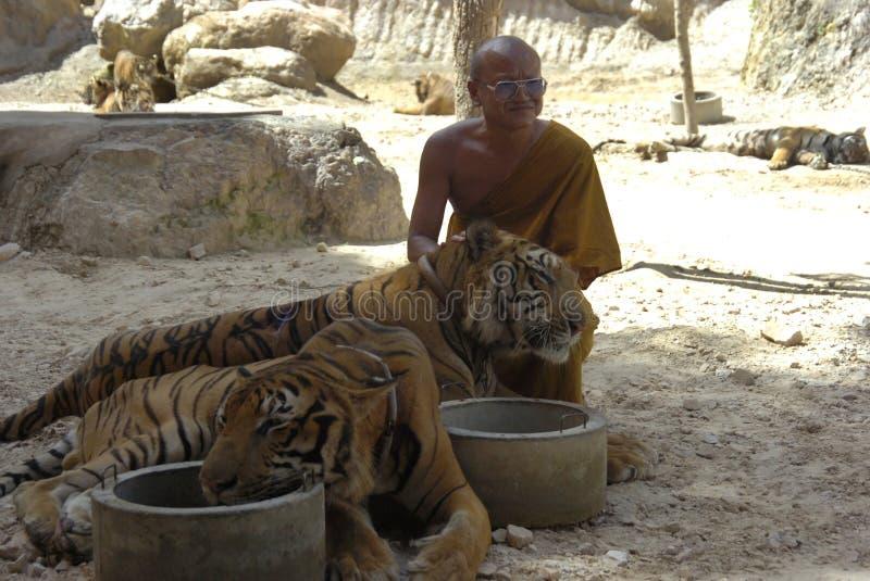 asia Bengal buddyjski kota michaelita Thailand tygrys obraz stock