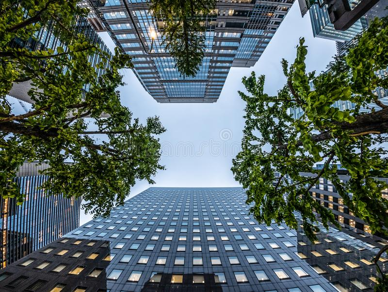 Asia Business concept for real estate and corporate construction . looking up view of modern city skyline with trees. Asia Business concept for real estate and stock photography