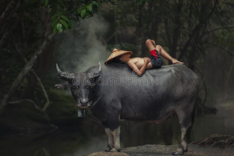 Asia children sleeping on water buffalo. royalty free stock images