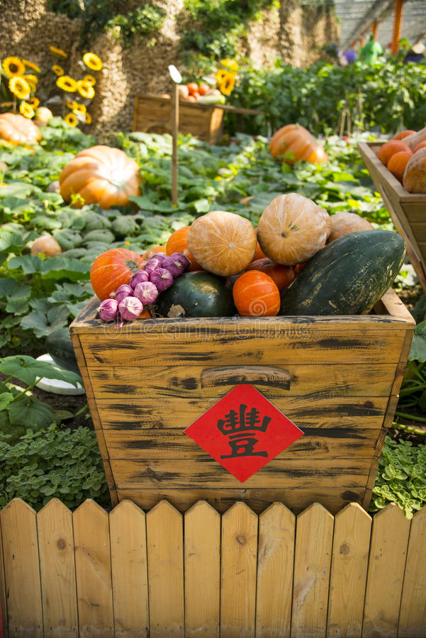 Asia China, Beijing, agricultural carnival, modern architecture,indoor exhibition area, Wooden basket, pumpkin. Asia China, Beijing agricultural carnival is a stock image