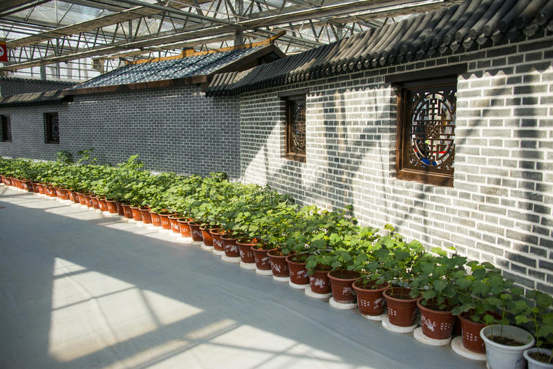 Asia China, Beijing, agricultural carnival, modern architecture, indoor exhibition hall, scene, Brick wall, potted. Asia China, Beijing agricultural carnival is stock image