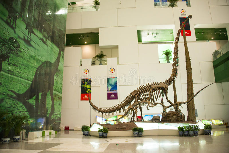 Asia China, Beijing, science and technology museum, dinosaur skeletons. Asia China, Beijing, science and technology museum, modern building, indoor exhibition royalty free stock images