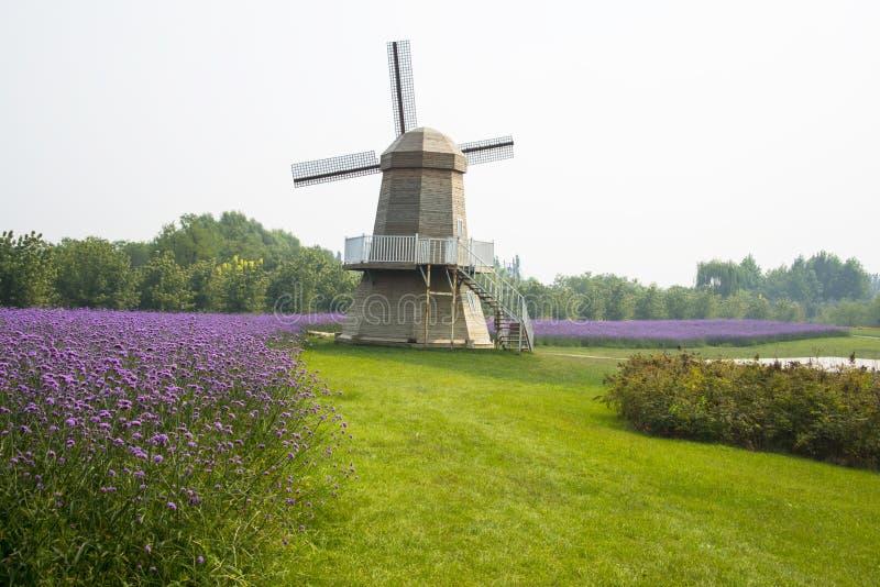 Asia, China, Pekín, shunyi florece, vira hacia el lado de babor, paisaje del jardín, molinoes de viento, bonariensis de la verben imagen de archivo