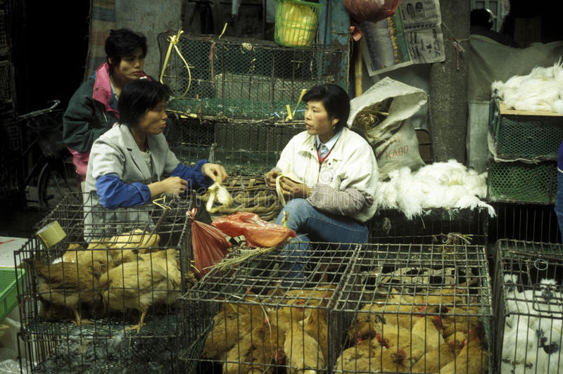 ASIA CHINA SHENZEN. The animal Market in the city of Canton or Guangzhou in the north of Hongkong in the province of Guangdong in china in east asia royalty free stock photos