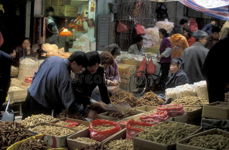 ASIA CHINA SHENZEN. The Market in the city of Canton or Guangzhou in the north of Hongkong in the province of Guangdong in china in east asia stock photos