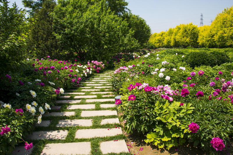 Asia Chinese, Beijing, Garden Expo, herbaceous peony Garden,Stone road stock photography