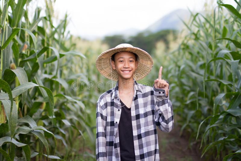 Asia farmer in middle corn farm royalty free stock images
