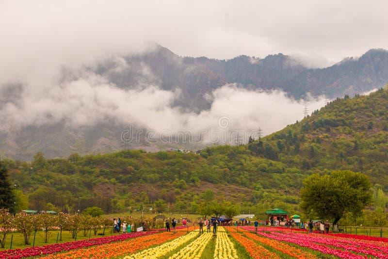 Asia& x27; s tulipanu wielki ogród w wiośnie fotografia stock