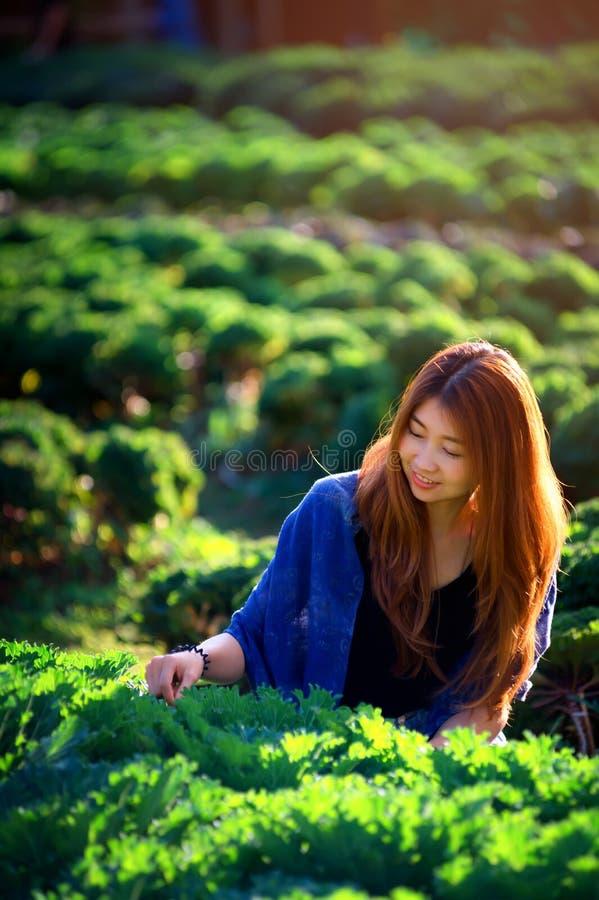 Asia tourist woman on vegetable farm at angkhang mountain Thailand. Portrait of asia tourist woman on vegetable farm at angkhang mountain chiangmai Thailand royalty free stock image