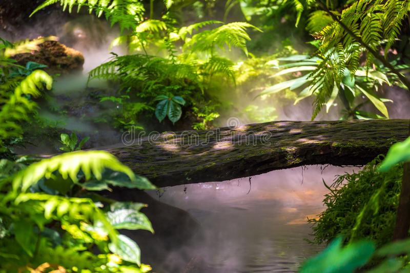 An Asia tropical rain forest. The little wood bridge over the water royalty free stock images