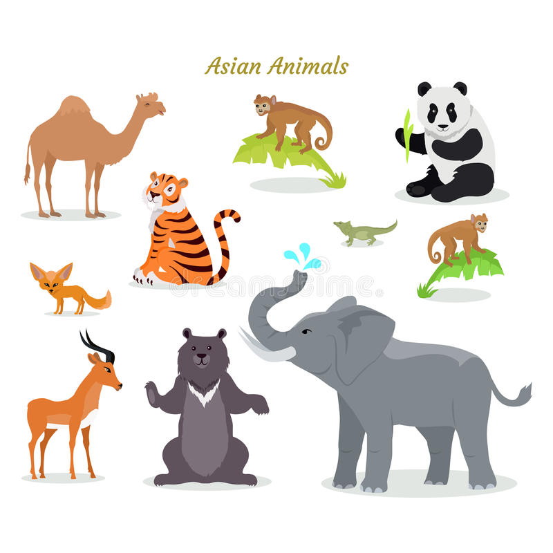Asian Animals Fauna Species. Camel, Panda, Tiger,. Asian animals fauna species. Cute asian animals flat vector. Northern predators. Nature concept for children s stock illustration