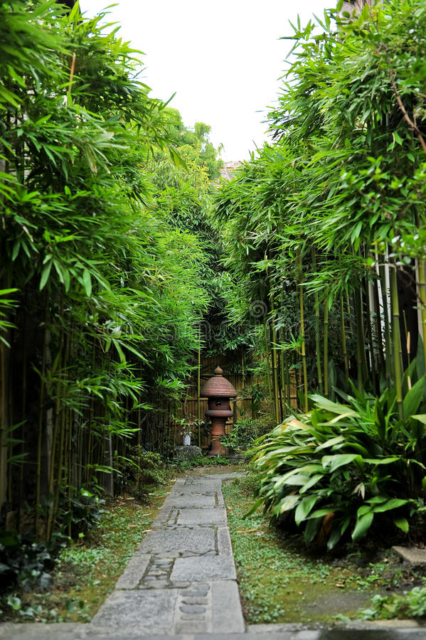 Asian Bamboo Landscape. An asian style bamboo landscape stock photography
