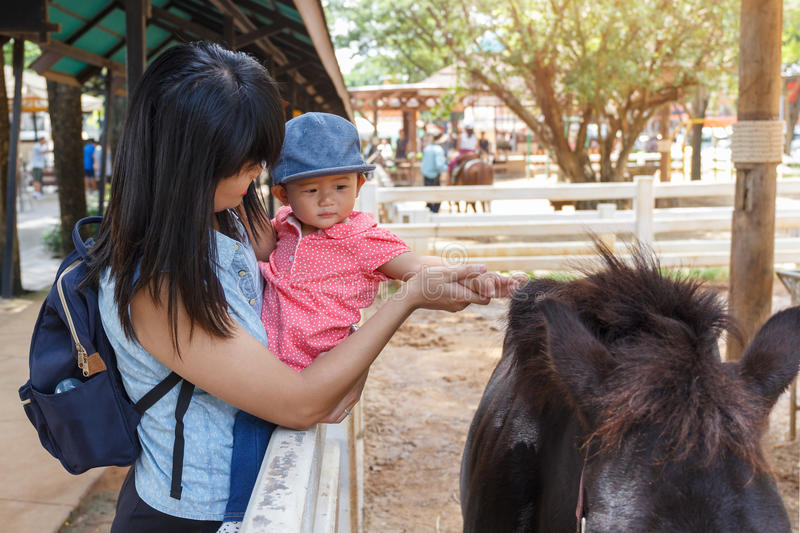 Asian beautiful mother is take care your cute baby touch fur hair horse in the farm. stock images