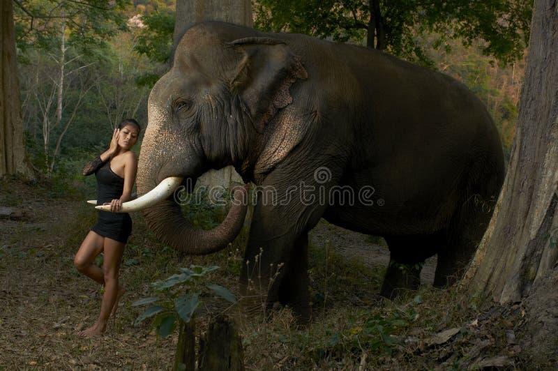 Asian Beauty With Friendly Elephant royalty free stock photo
